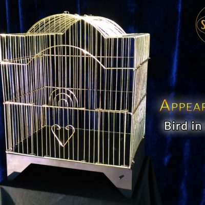 appearing bird in cage